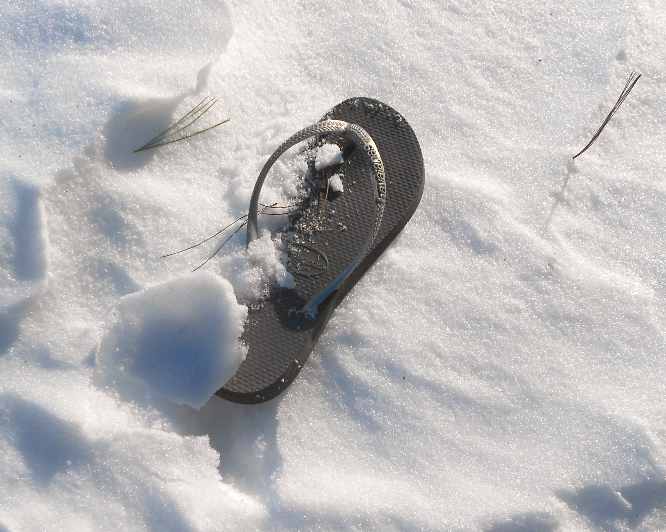flip flops for aussieal page 127 backyard galah cam